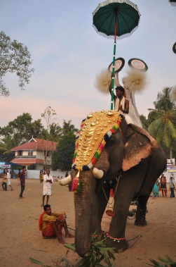 single-elephant-parur-kerala-inde